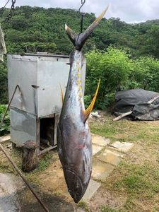 Yellowfin Tuna — Julien Desgrippes