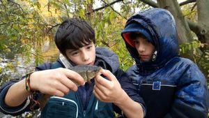 Common Carp — Manoa Ojeda Le Morzadec