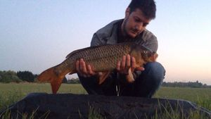 Common Carp — Julien Boyaval