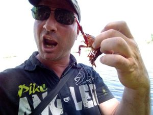 Red Swamp Crayfish — Cyril  Zuchetto