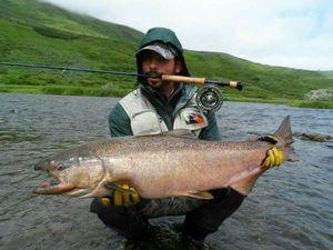 Chinook Salmon — Julien  DE LA VEGA