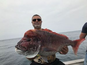 Snapper (Squirefish) — Chakib Abbadi
