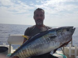 Southern Bluefin Tuna — nicolas perrot