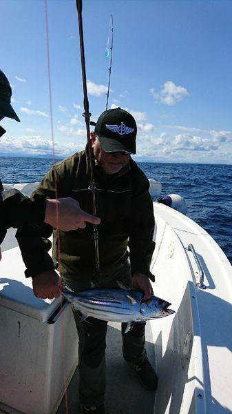 Skipjack Tuna by Julien  Yriarte   0