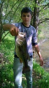 Largemouth Bass — Quentin Giraud