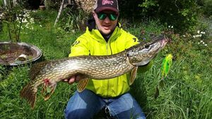 Northern Pike — Antoine VanMaercken