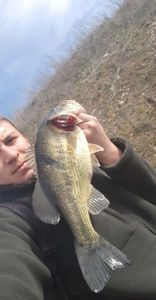 Smallmouth Bass — Samuel Brasseur