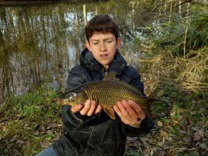 Common Carp — Thomas Langevin