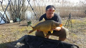 Common Carp — Jerome De Carpe Silure