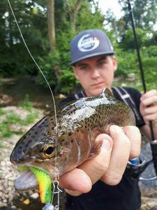 Rainbow Trout — Paul FishOndor