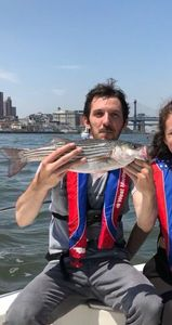 Striped Bass (Landlocked) — Benjamin Owczarz