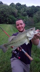 Largemouth Bass — Guillaume Dumesnil