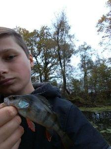 European Perch — ALSA FISHING