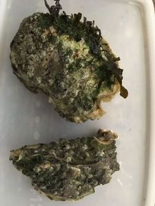 Pacific Oyster — François BARBEAU