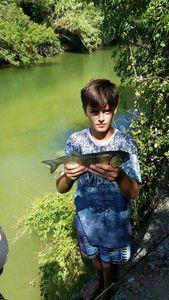 Chub — Le Pêcheur Du 31 Gaillardou