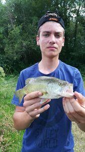 Largemouth Bass — Hugo Salas