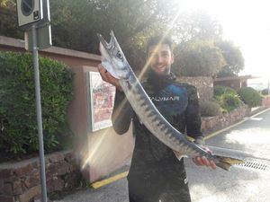Great Barracuda — Yvan Desilles