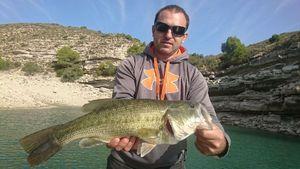Largemouth Bass — David Domas