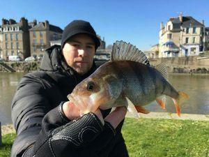 European Perch — Kawasemi  Fishing