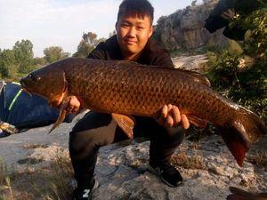 Common Carp — Romain Sely