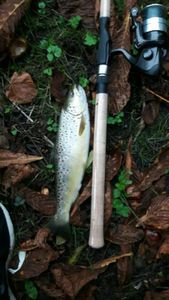 Brown Trout — Guillaume Agrapart