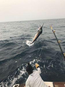 Blue Marlin (Atlantic) — Stephane Millez