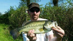 Black Bass (Achigan à Grande Bouche) — Steven Ferré