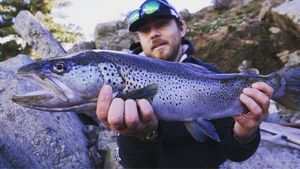 Brown Trout — Christian Galliot