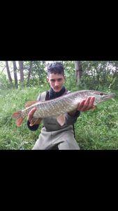 Northern Pike — Tom Belguise