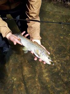 Brown Trout — Adriano Crossbow fisherman