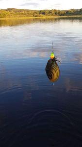 Blue Mussel — chasseur de brocosaure sur insta suivez moi