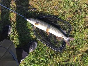 Northern Pike — Flox Fishing