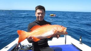 Coral Trout — Tom Legros