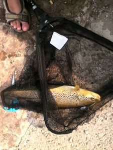 Brown Trout — Alexis et Florian
