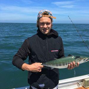Skipjack Tuna — Maxime Mestre Wessler