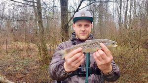 Truite Fario — Jordan Monkey Fishing