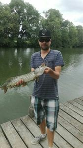 Northern Pike — Dydy Moby