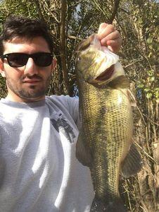 Largemouth Bass — Muhammed Sisman