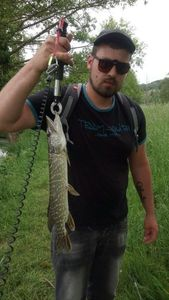 Northern Pike — Cyril Seigneur