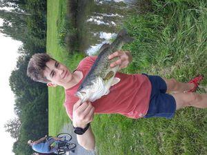 Largemouth Bass — Quentin Vicente