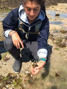 Crabe Enragé (Crabe Vert) — Martin Plage