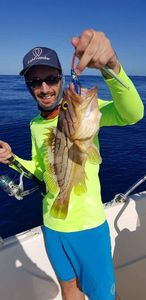 Oblique-Banded Grouper — Mathias Larrieu