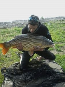 Common Carp — Pierro Nico