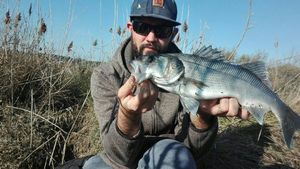 European Bass — Guillaume le Gall