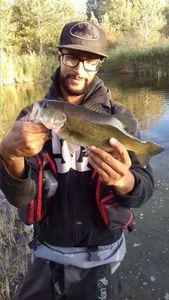 Largemouth Bass — Patrick Rodrigues