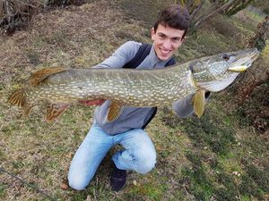 Northern Pike — Julien  Sabatier