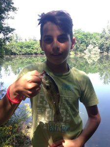 Largemouth Bass — Mathis Dartigues