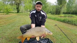 Common Carp — Aurelien  Vidal