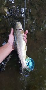 Brown Trout — Jean-baptiste Mary