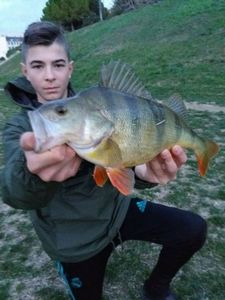 European Perch — Sachombass34 g